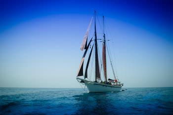 Yacht DALLINGHOO - 11