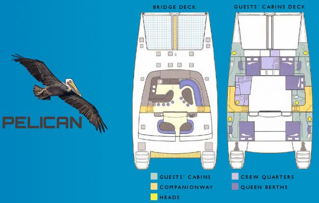 PELICAN Layout