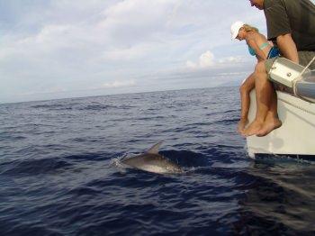 Sealife - dolphin