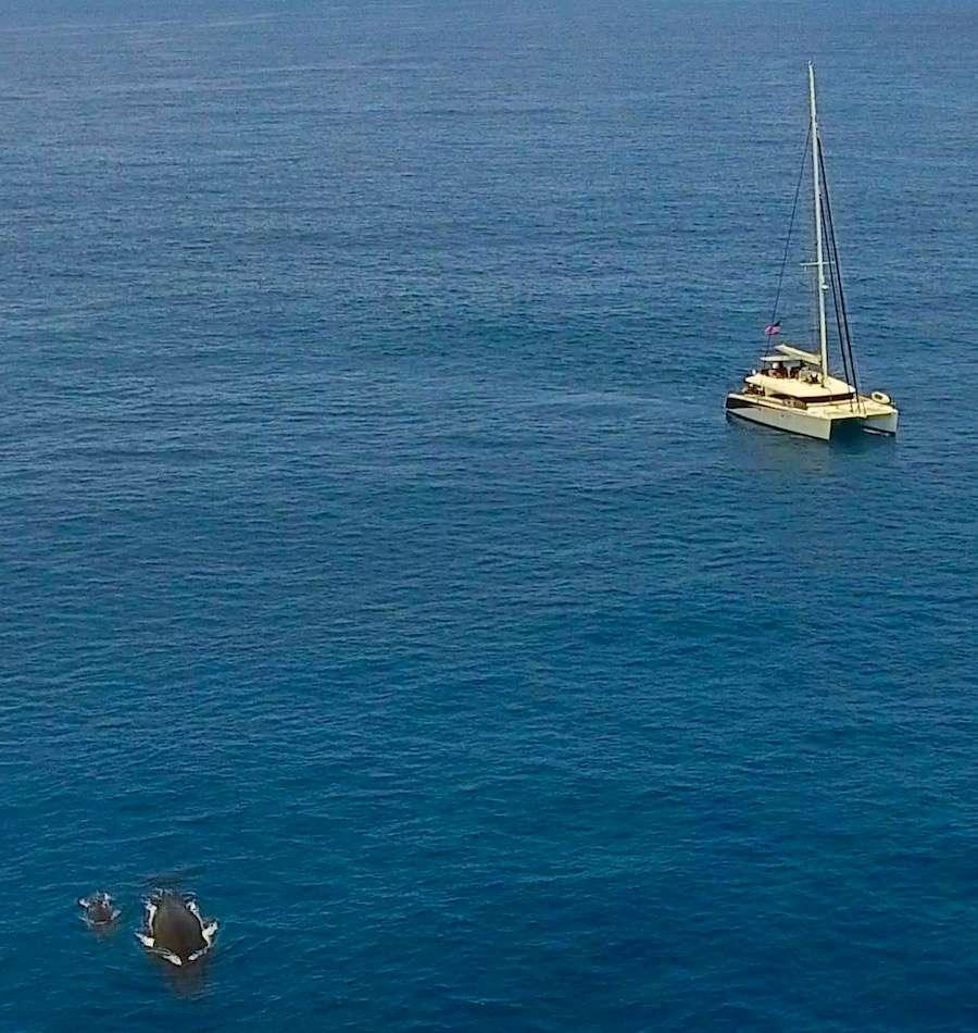 Catamaran Charter Lady Katlo
