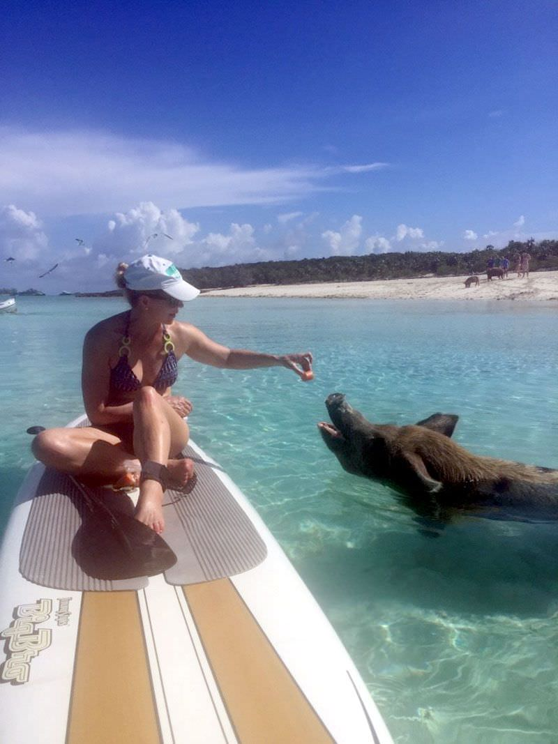 Bahamas - Swimming Pigs!