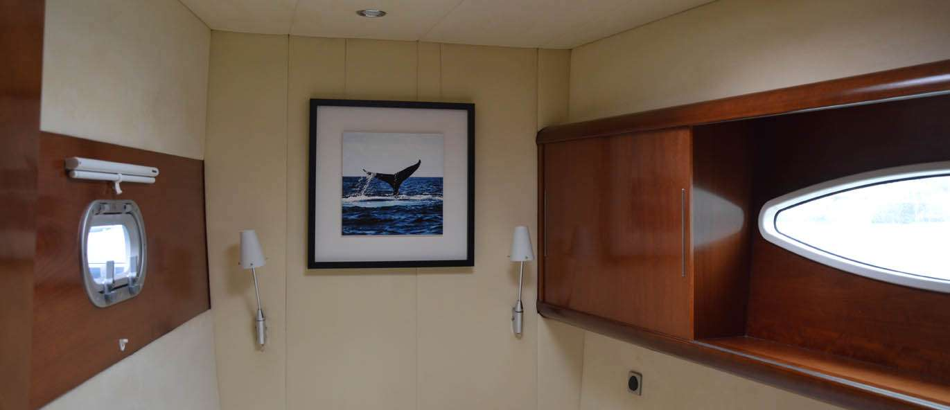 Whale Sailing