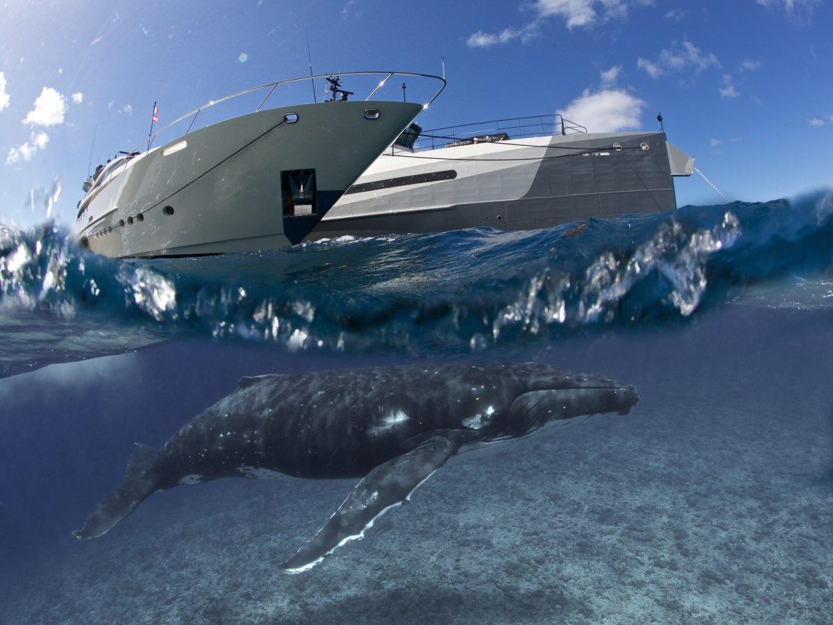 Vantage & AdV w/Whale