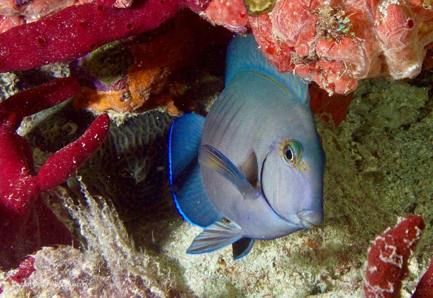 ISOLABLUE yacht image # 10