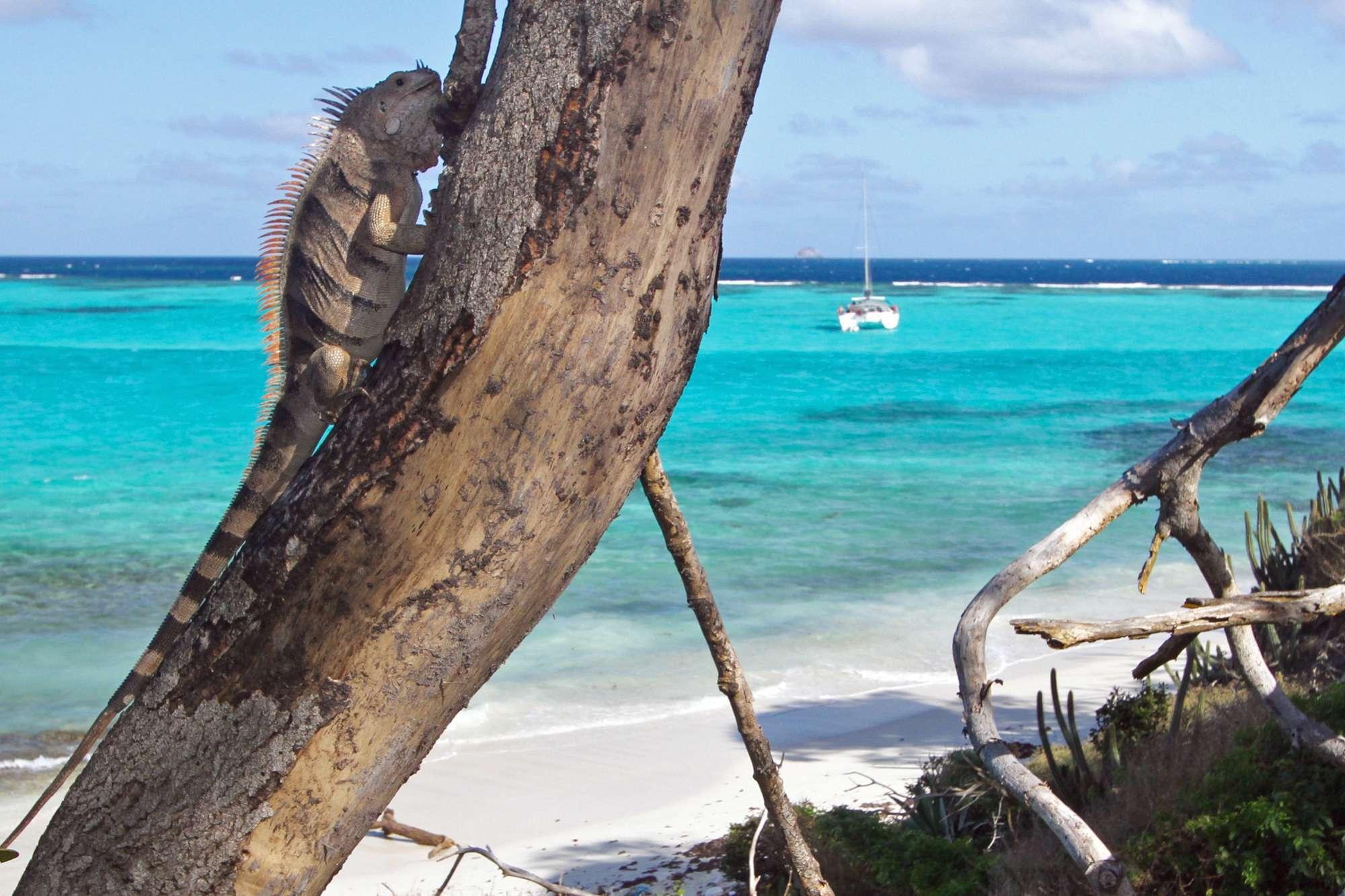 ISOLABLUE yacht image # 13